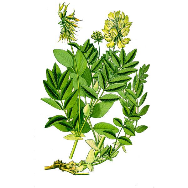 растения при повышенном холестерине