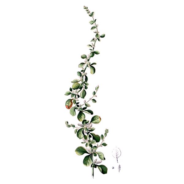 Пол-пала, трава и цветки